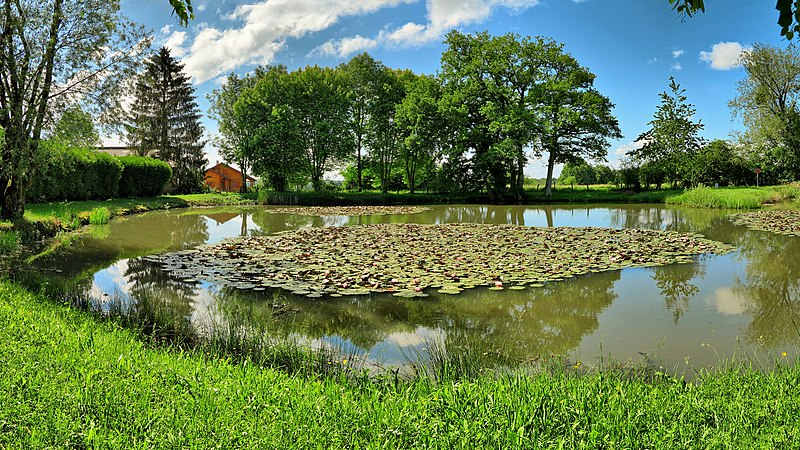 Nos conseils pour aménager un étang dans son jardin